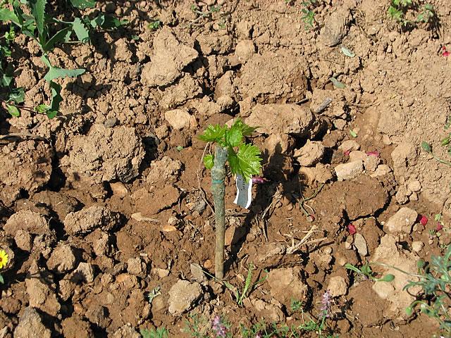 klimata-2013-04-09-b.jpg