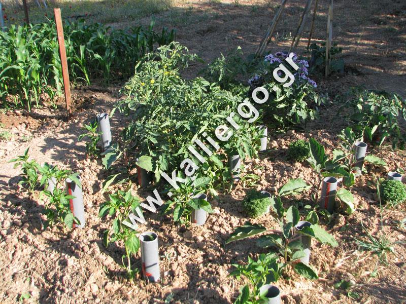 deep-irrigation-2015-05-16.jpg