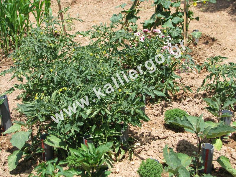 deep-irrigation-2015-05-23-a.jpg